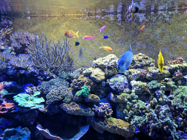 Chattanooga Aquarium Tickets