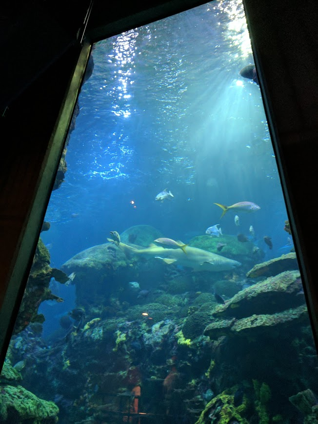Perspective On Life and The World Courtesy of The Tennessee Aquarium   The Tony Burgess Blog