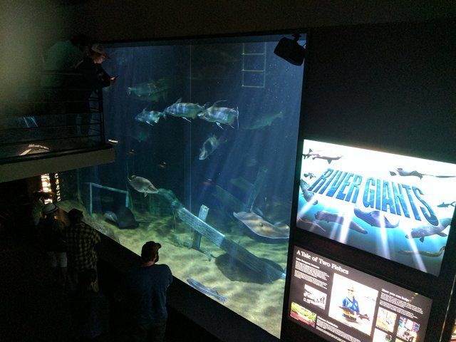 A Day Of Fun At The Tennessee Aquarium In Chattanooga