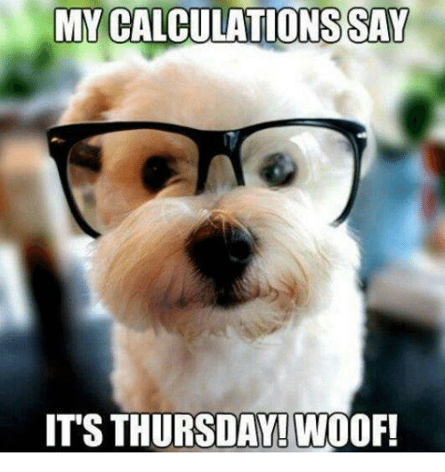 say-my-calculations-its-thursday-woof-8077003