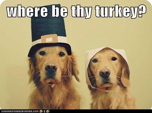 Funny-Thanksgiving-Dog-20