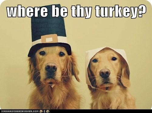 Funny-Thanksgiving-Dog-20